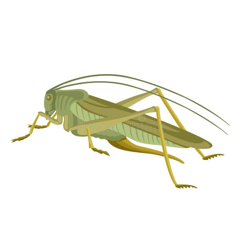 Grasshopper green vector illustration flat style profile vector illustration