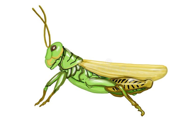 Grasshopper Illustration stock photography