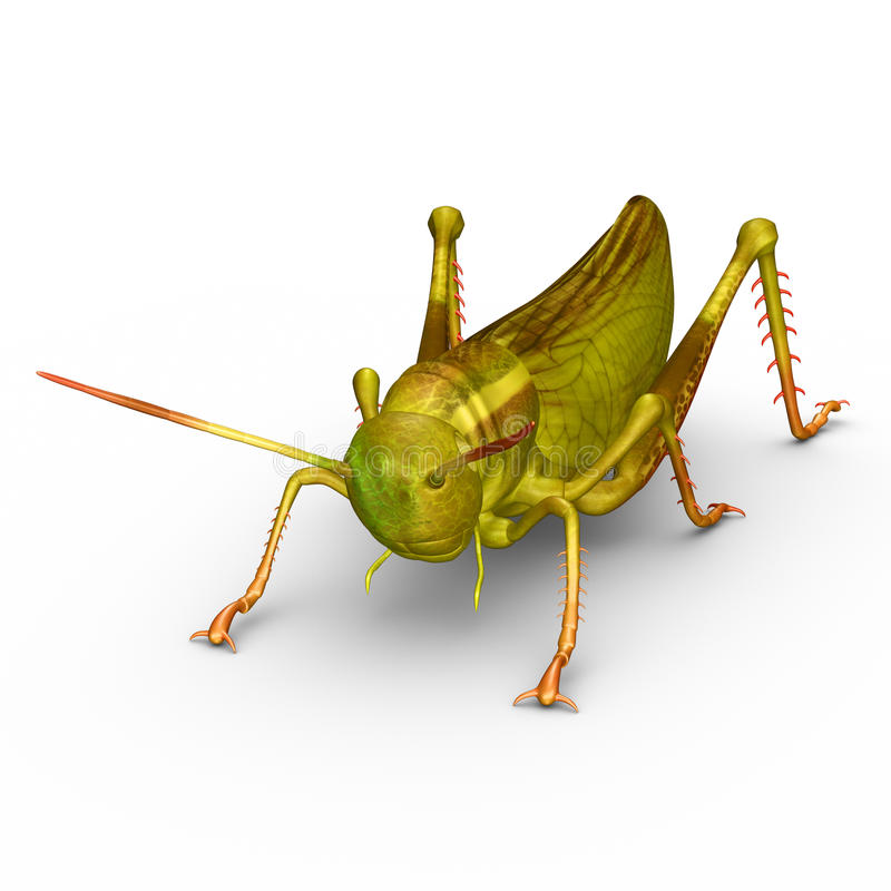 Grasshopper vector illustration