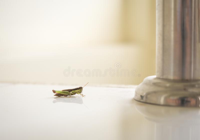 Grasshopper inside the house. Comparison between small insect and metal pillar royalty free stock image