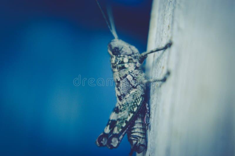 Grasshopper Or Katydid Free Public Domain Cc0 Image