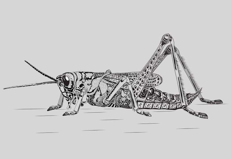Download Grasshopper stock vector. Illustration of legs, stripes - 36982462