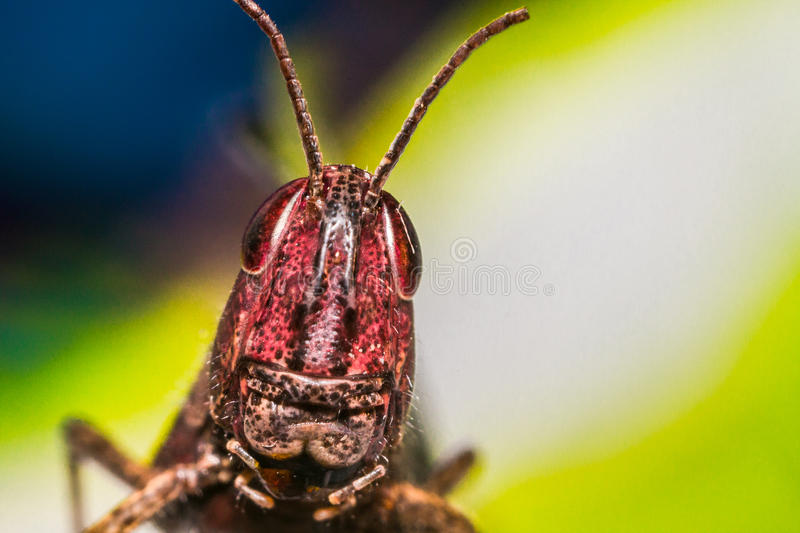 Grasshopper on a multicolored background royalty free stock images