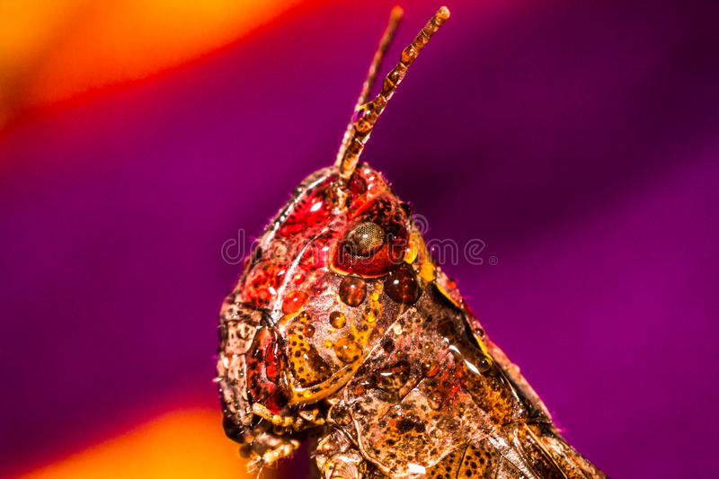 Grasshopper on a multicolored background royalty free stock photo