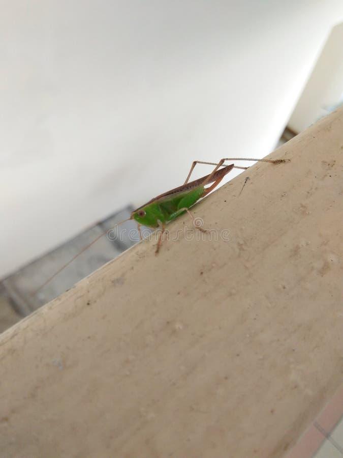 Grasshopper on Railing stock photos