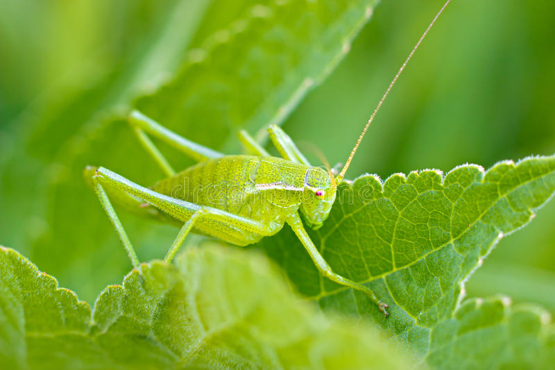 Download The Grasshopper Sitting In The Grass Stock Image - Image: 25231177