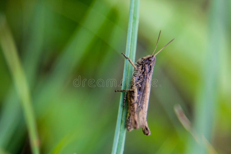 Grasshopper is standing green leaf stock images