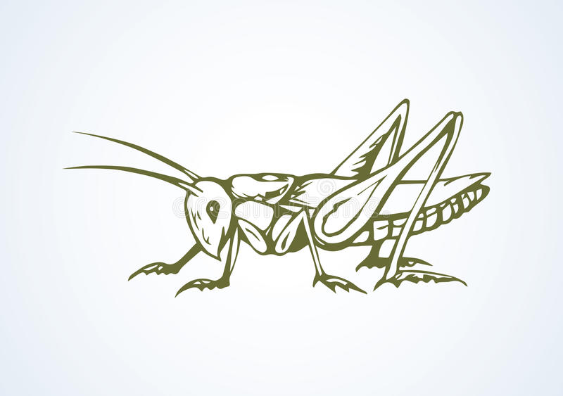 Grasshopper. Vector drawing. Big cute wild garden grig isolated on white backdrop. Freehand outline black ink hand drawn picture logo sketchy in art scribble vector illustration