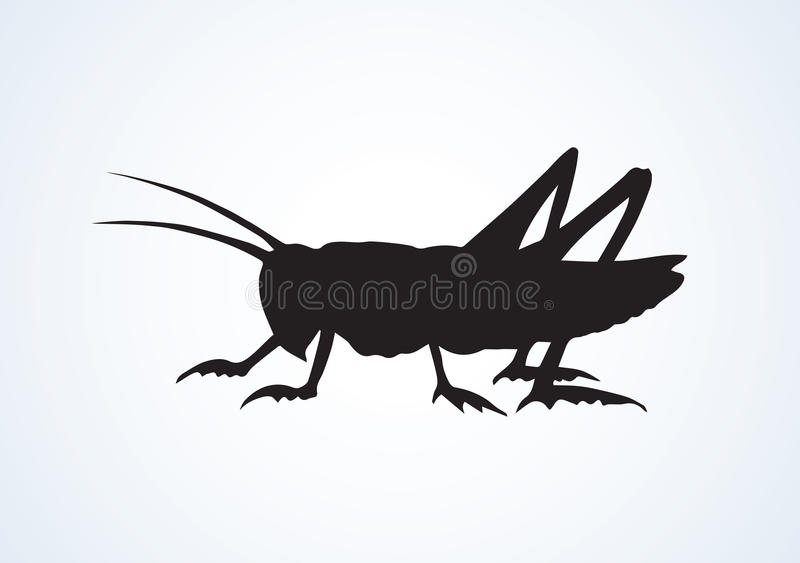 Grasshopper. Vector drawing. Big cute wild garden grig on light backdrop. Freehand outline black ink hand drawn picture logo sketchy in art scribble retro style vector illustration