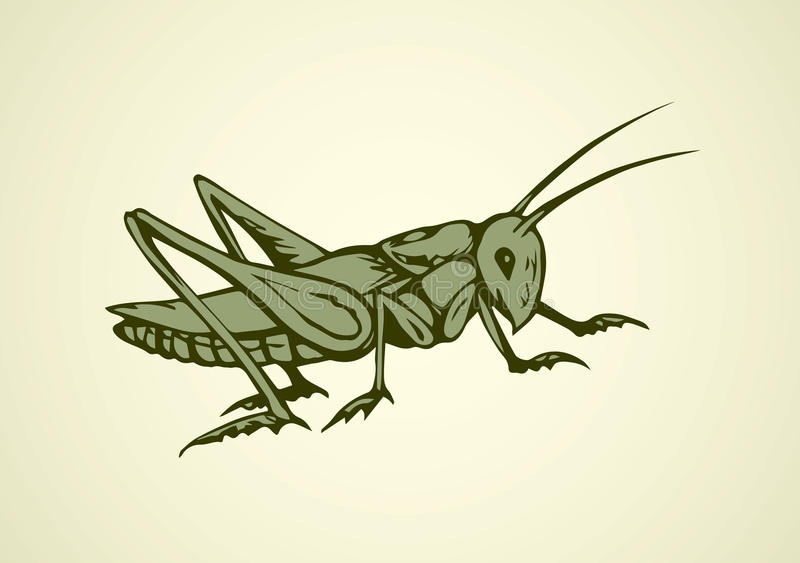 Grasshopper. Vector drawing. Big cute wild garden grig on light backdrop. Freehand outline black ink hand drawn picture logo sketchy in art scribble retro style stock illustration