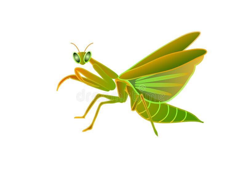 Grasshopper on white background royalty free illustration