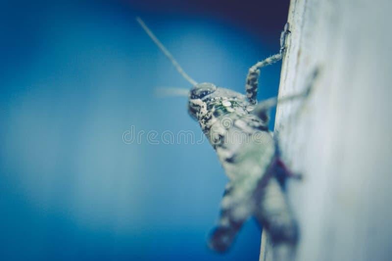 Grasshopper On Wood Free Public Domain Cc0 Image