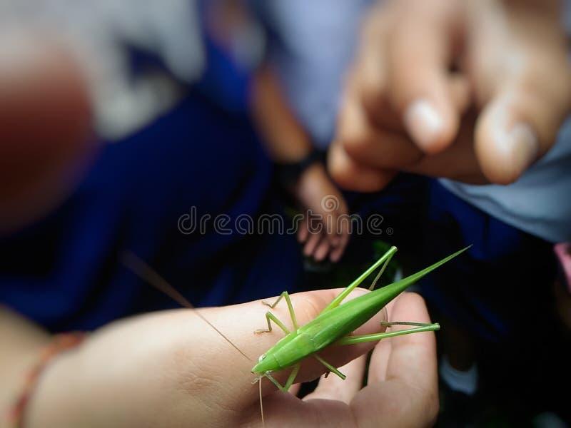 grasshoppers στοκ φωτογραφία