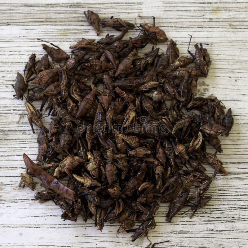 Grasshoppers pronti a mangiare fotografia stock libera da diritti
