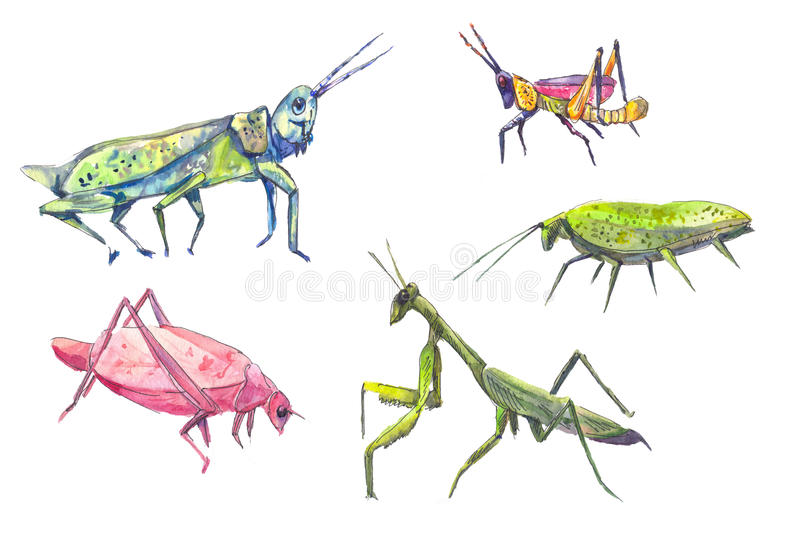 Grasshoppers set. Set of grasshoppers and locust in watercolor stock illustration