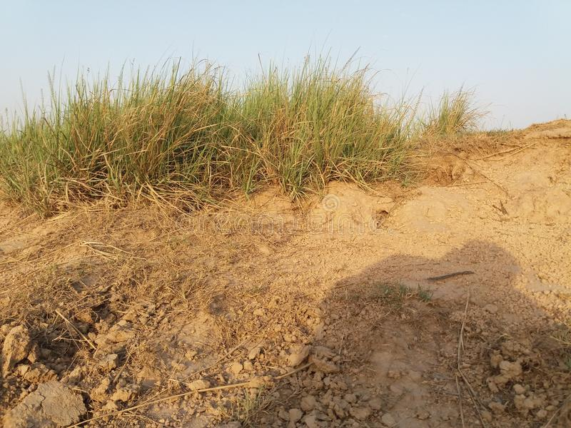 Grassk de forêt photo stock