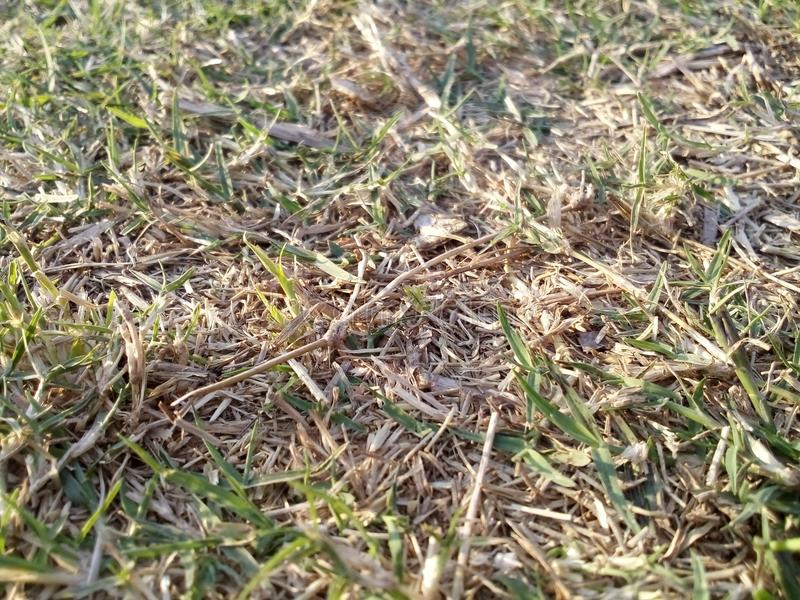 grassland fotografia stock