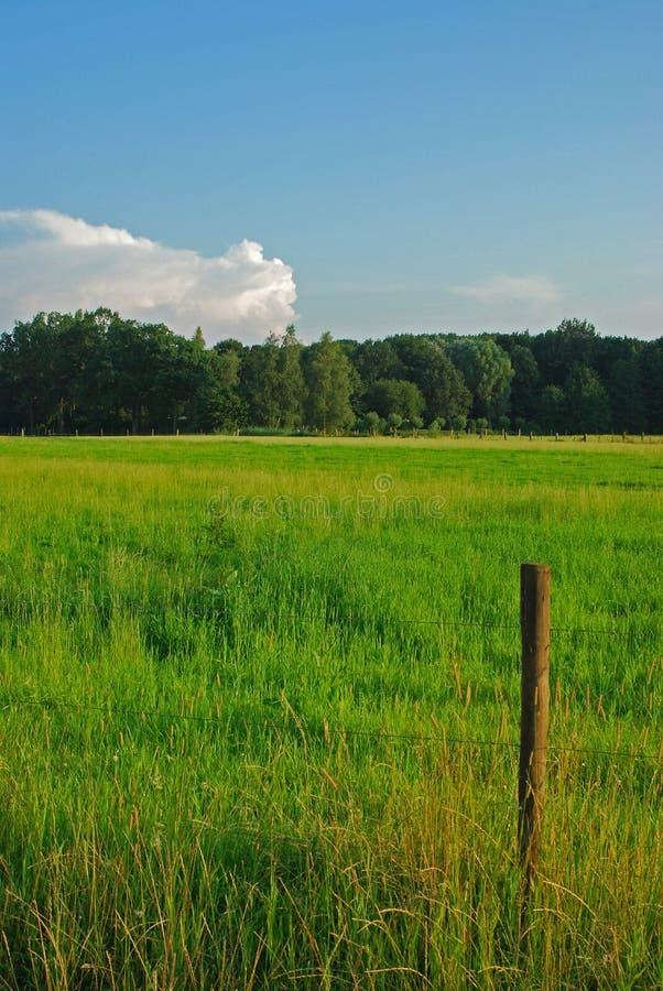Grassland. Nice grassland near my ome royalty free stock image