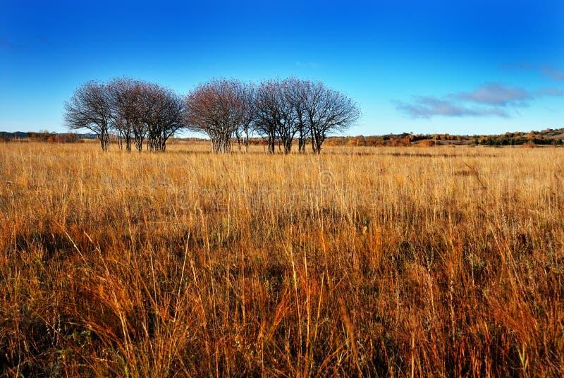 Grassland stock photography