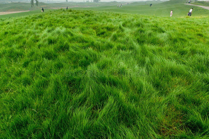 Download Grassland stock image. Image of yellow, wilderness, grass - 25861351