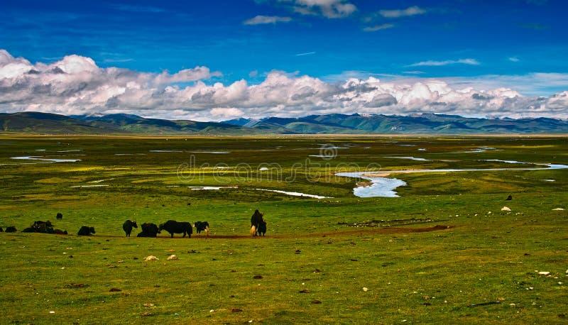 Download Grassland stock image. Image of season, asian, beautiful - 28656527