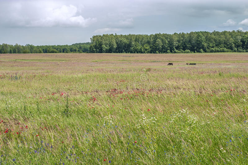 grassland obrazy royalty free