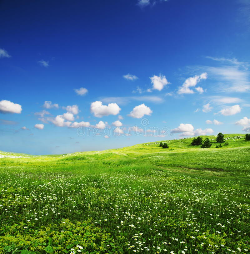 grassland zdjęcie royalty free