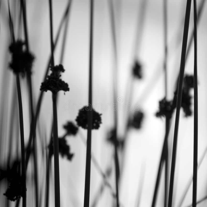 Grassland. Varieties of flowering grass plants royalty free stock photography
