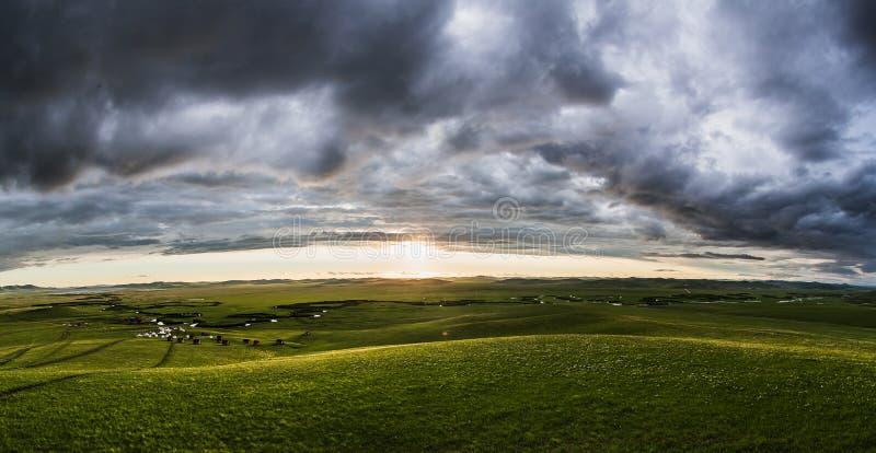 grassland obrazy stock