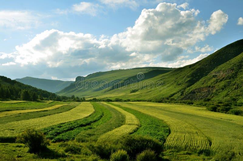 grassland imagem de stock royalty free