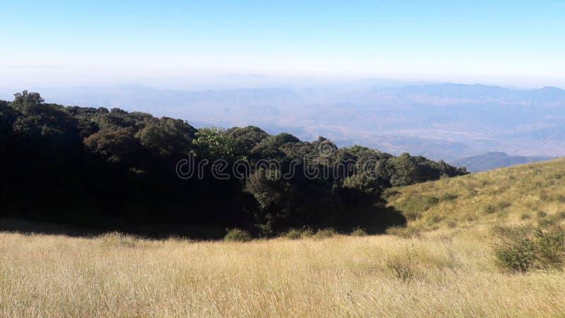 grassland foto de stock