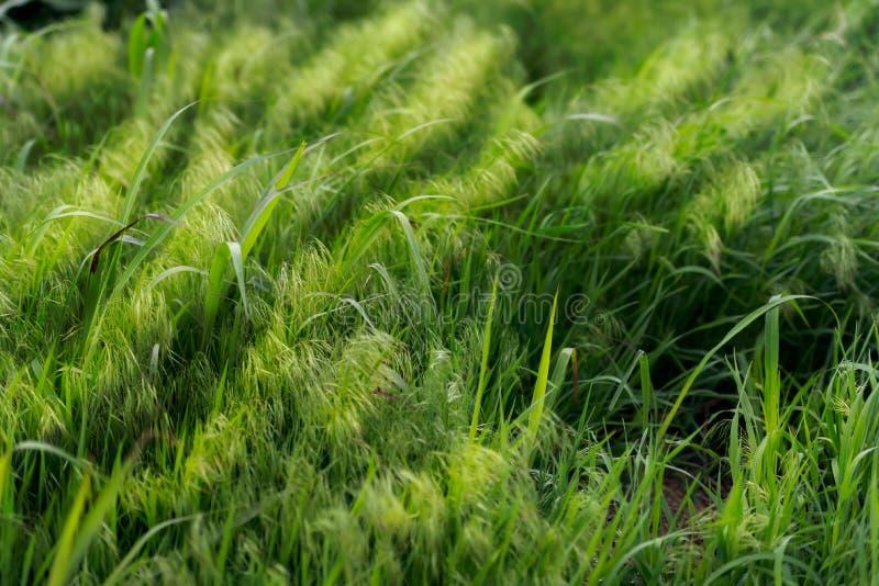 A Grassland Background royalty free stock photos