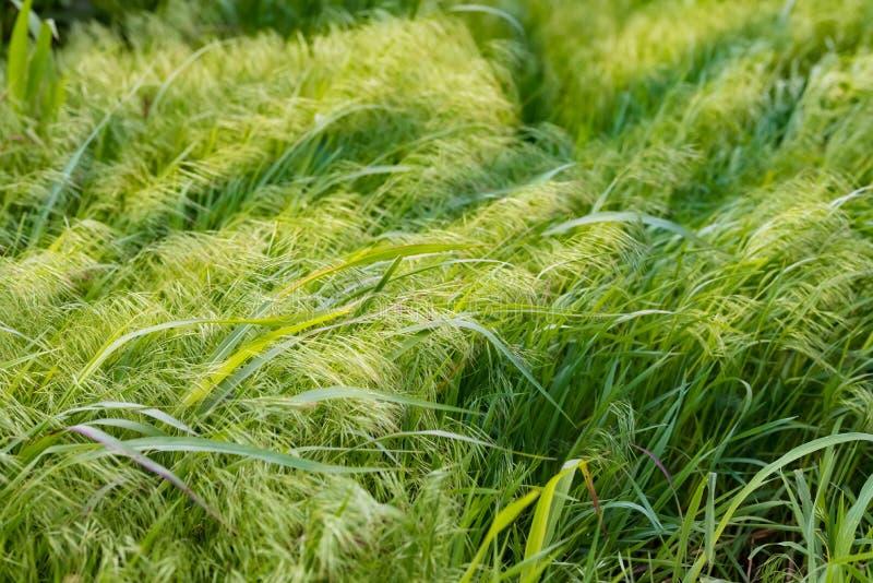 A Grassland Background stock image