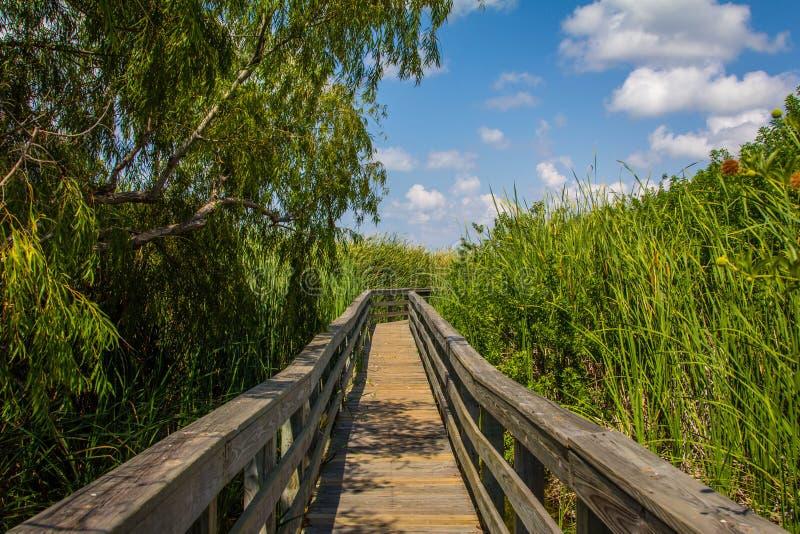 Grassland Boardwalk. A Boardwalk through a swampy area to observe birds in Port Aransas, Texas stock image