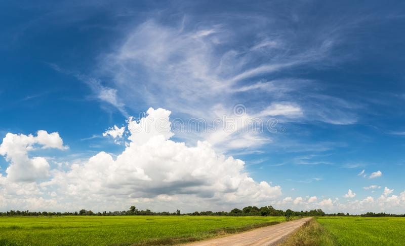 Grassland with dirt road on blue sky royalty free stock photography