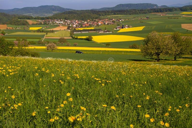 Grassland, Field, Yellow, Meadow Free Public Domain Cc0 Image