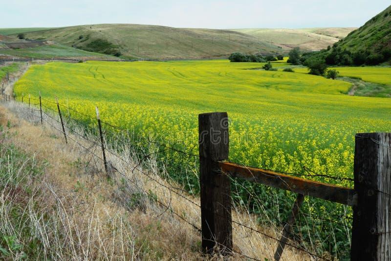 Grassland, Field, Yellow, Pasture Free Public Domain Cc0 Image