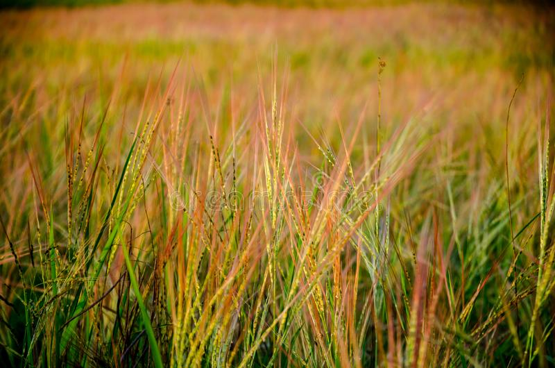 Grassland, the first thing of life. royalty free stock photography