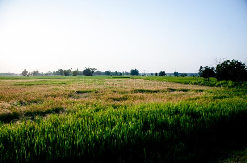 Grassland the first thing of life in Thailand stock photography