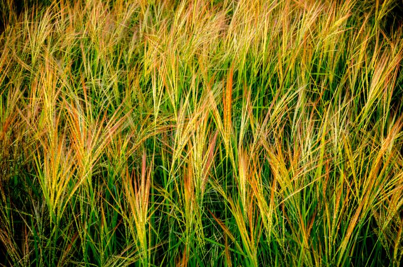 Grassland the first thing of life in Thailand stock photo
