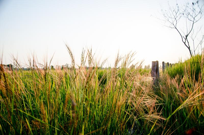Grassland the first thing of life in Thailand stock image