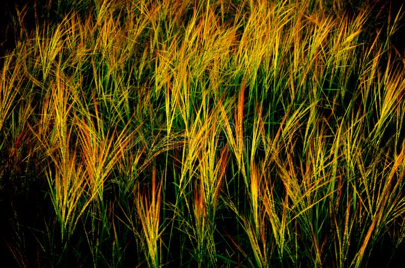 Grassland the first thing of life in Thailand stock photos