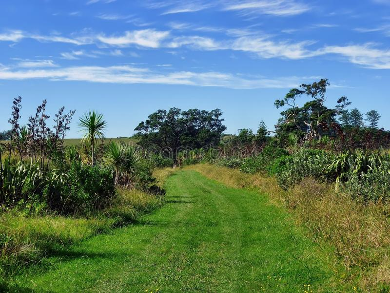 Grassland hiking trail with bushes and trees royalty free stock photo