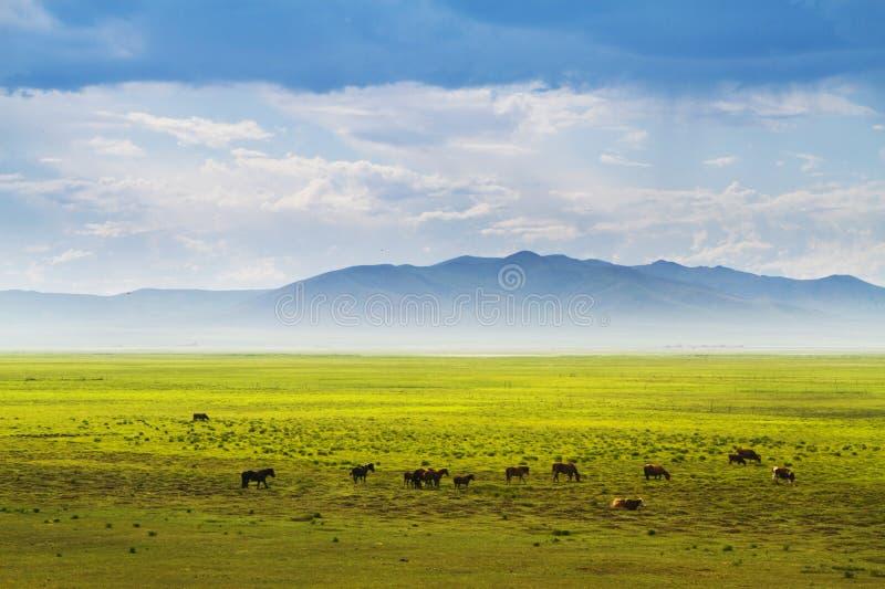 Grassland in Inner Mongolia stock images