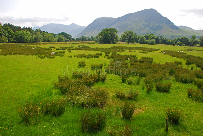 Grassland in Lake District stock image