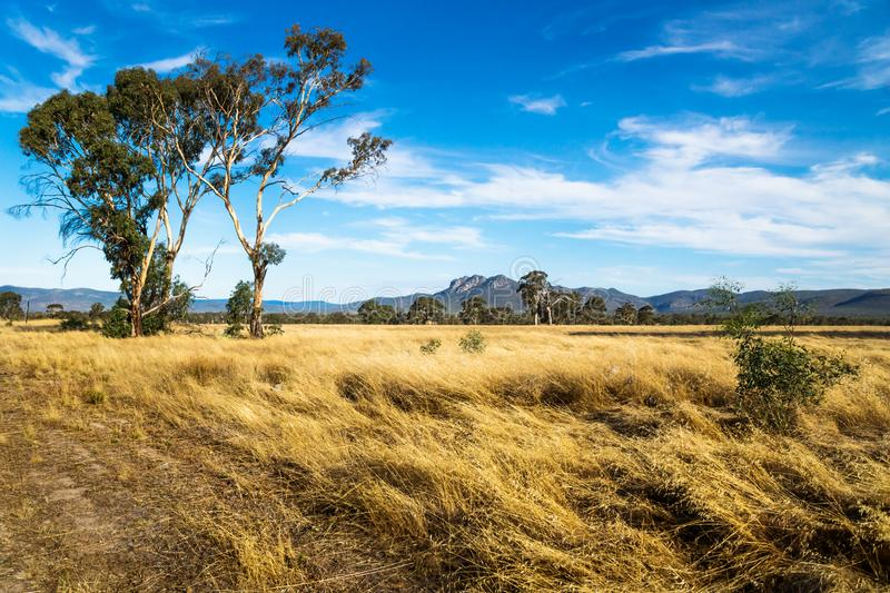 Grassland landscape in the bush with Grampians mountains in the background, Victoria, Australia royalty free stock photography