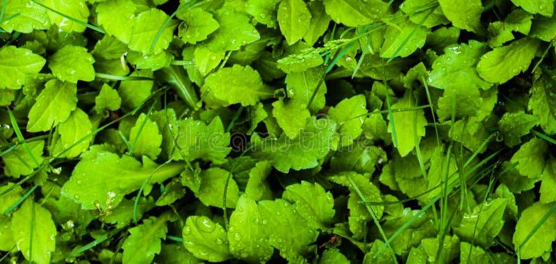 Grassland lawn; sward; greensward; grass-plot; sod stock photos