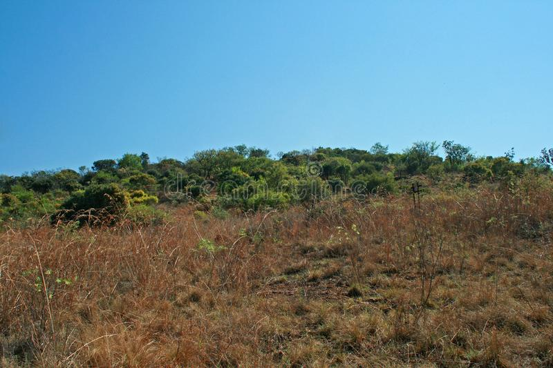 GRASSLAND ON A SLOPE WITH GREEN BUSHES AND TREES IN BACKGROUND royalty free stock photo