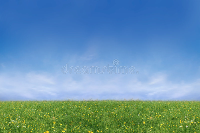 Download Grassland In Spring Time Royalty Free Stock Photography - Image: 2315407