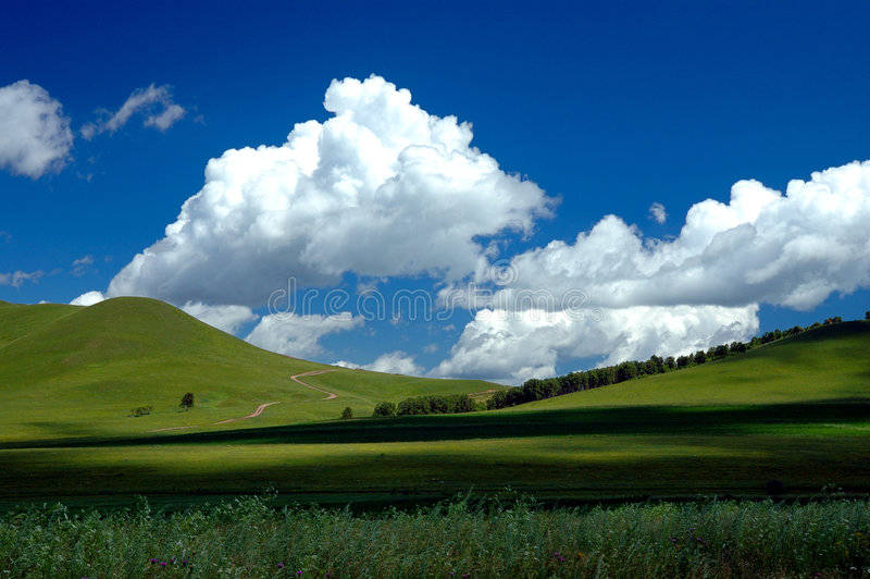 Grassland Summer stock photo
